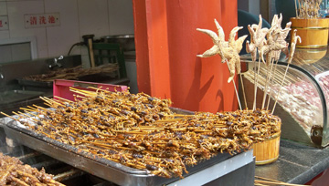 Scorpions and Starfish on Sticks