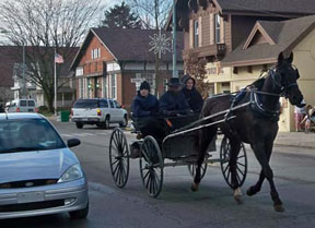 Amish in Horse & Buggy